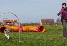 Hundesportart Hoopers